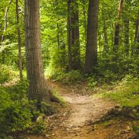 Wald mit Trampelpfad und Lichtung